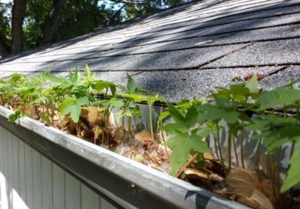 plants growing in gutter